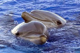 delfines2